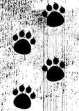 Impresiones de la pata Imagen de archivo libre de regalías