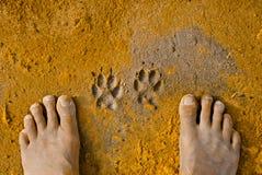 Impresiones de la pata y un par de pies Imagenes de archivo