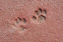 Impresiones de la pata del gato en concreto Imágenes de archivo libres de regalías