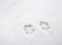 Impresiones de la pata del perro Imágenes de archivo libres de regalías