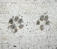 Impresiones de la pata del perro y del gato Foto de archivo libre de regalías