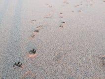 Impresiones de la pata en Foto de archivo libre de regalías