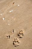 Impresiones de la pata en una playa de la arena Foto de archivo libre de regalías