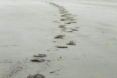 Impresiones del enganche del caballo en Sandy Beach foto de archivo