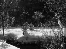 Impresiones del invierno en blanco y negro Fotos de archivo