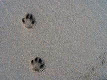 Impresiones del perrito. Fotos de archivo