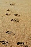 Impresiones del perro fotos de archivo libres de regalías