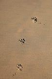 Impresiones del perro Imágenes de archivo libres de regalías