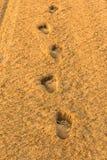 Impresiones del pie Fotos de archivo