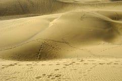 Impresiones del pie en arena Imagen de archivo libre de regalías