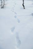 Impresiones del pie en la nieve Fotos de archivo libres de regalías