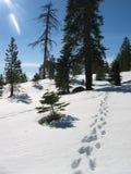 Impresiones del pie en nieve fotografía de archivo