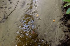 Impresiones del pie del mapache en el fango Imagenes de archivo