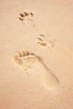 Impresiones del pie y de la pata en la playa Imagen de archivo
