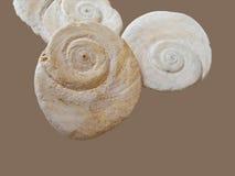 Impresiones del shell del mar Fotos de archivo
