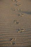 Impresiones en la arena Foto de archivo