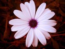 Impresiones macras de la bella arte del papel pintado del fondo de la pequeña fruta salvaje hermosa de la flor fotografía de archivo libre de regalías