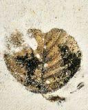 Impressão da folha do outono foto de stock