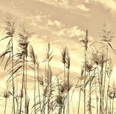 Impressão da grama de Reed Imagens de Stock