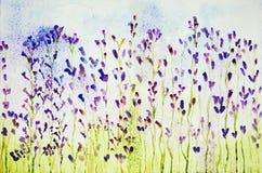 Impressão de um campo da alfazema visto de um baixo ponto de vista Fotografia de Stock Royalty Free