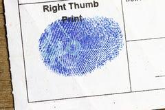 Impressão digital direita do polegar Foto de Stock