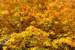 Impressão do outono foto de stock royalty free