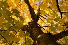 Impressão do outono Fotografia de Stock Royalty Free