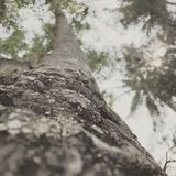 Impressões da árvore Fotografia de Stock