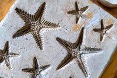 Impressões da argila da estrela do mar Fotos de Stock