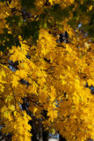 Impression of autumn colors Stock Photography