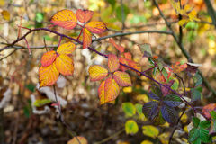 Impression of  autumn colors Royalty Free Stock Photography