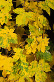 Impression of  autumn colors Stock Photos