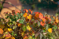 Impression of autumn colors Royalty Free Stock Images