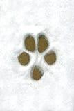 Impression de crabot dans la neige Photos stock
