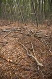 Impression de forêt d'automne Photographie stock libre de droits