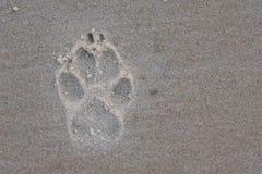 Impression de patte dans le sable Image stock
