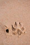 Impression de patte de crabot en sable Photographie stock