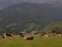 Impression de terres cultivables de la Nouvelle Zélande Photographie stock