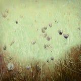 Impression de Wildflower sur le papier antique Image stock