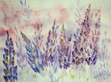 Impression des lupines bleuâtres Photos stock