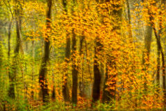 Impression of Fall Colors. Impressionist photo of intentional camera movement autumn trees stock photography