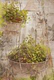 Impression florale de cru images stock