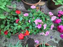 Impression flower Stock Photo
