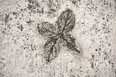 Impression of Leaves in concrete Stock Image