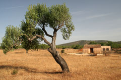 Impression from Mallorca. Tree with old house in rural surroundings Stock Photography