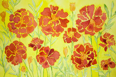 Impression of marigold on a yellow background. Stock Image