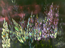Impression nocturne rougeâtre chaude des lupines jaunes et roses Photos stock