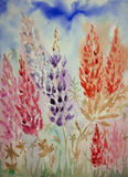 Impression of red and purple lupines from a low viewpoint. Royalty Free Stock Image