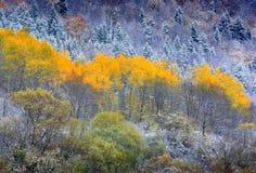 Impression trees Royalty Free Stock Image