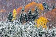 Impression trees Stock Photo